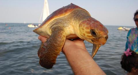 Wie weet.. misschien ziet u wel een schildpad ?!