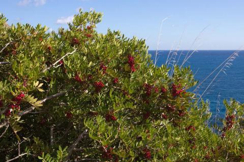 Sardinië vakantie - de kracht van mastiek